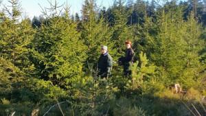 Baumschlagen Großwald